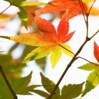 秋には秋が似合うな