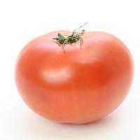 旬野菜 トマト