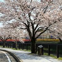 桜の咲く季節